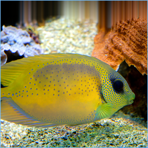 Pacific Coral Rabbitfish or Bluespotted Spinefoot